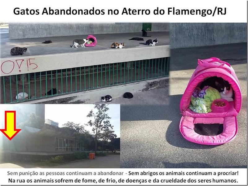 gatos_aterro_flamengo
