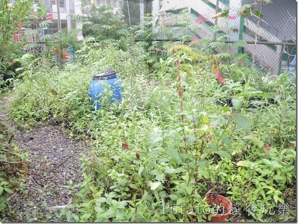 菁寮國小的蝴蝶園-園區內的植物