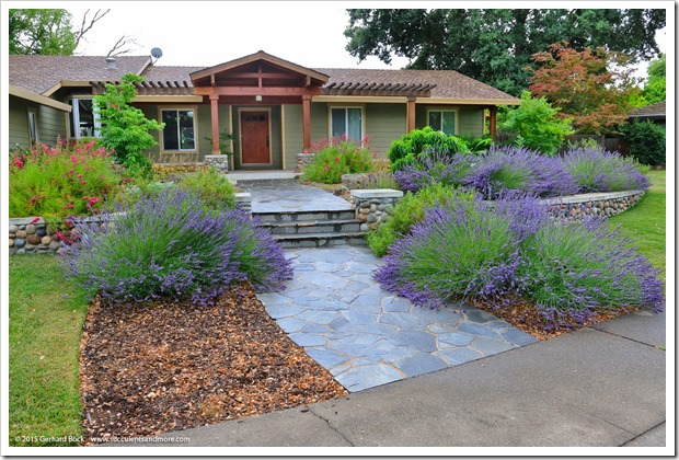 Succulents and more craftsman inspired front yard in for Landscaping rocks sacramento