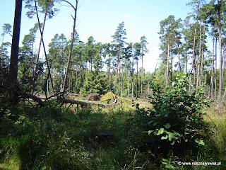 Słowiński Park Narodowy - Las