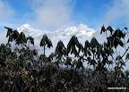 Na wysokości 3000-4000 m npm rosną już tylko krzewy rododendronów.