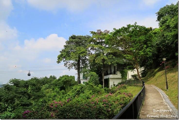 新加坡花柏山 (15)