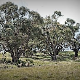 by Eugene Dopheide - Landscapes Prairies, Meadows & Fields