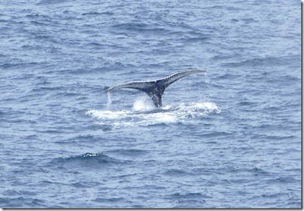 nl_pr_whale40