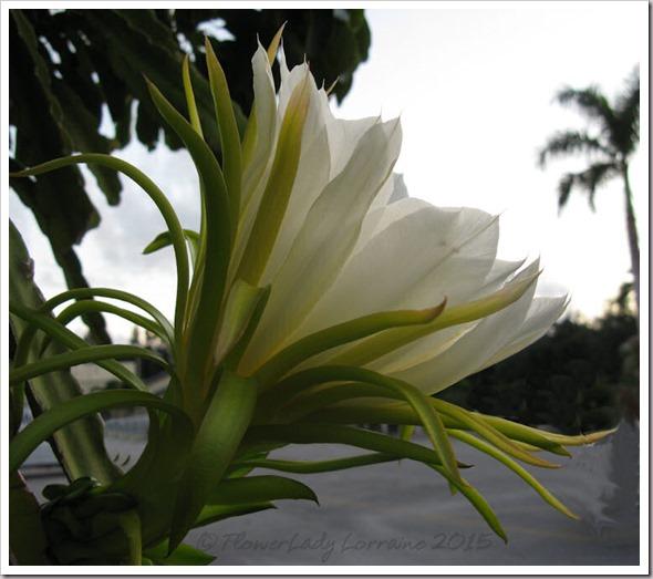 08-21-cactus