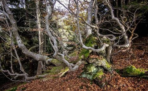 V lesoch severného svahu Kojšovskej hole.