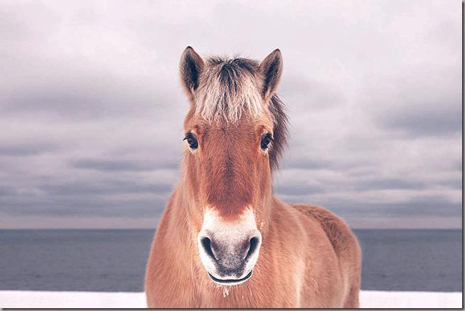 Wild-Horses-Photography12-900x600