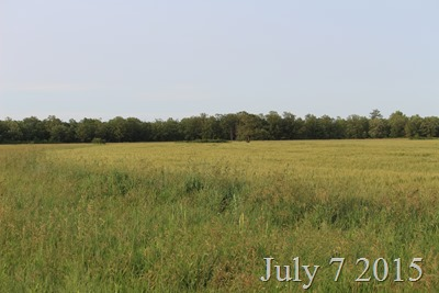 July 7 The field