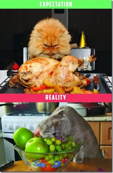cats-expectations-reality-008