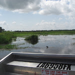 Our Airboat Adventure ride in New Orleans to see the swamps and gators 07242012-45
