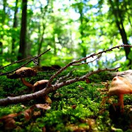Land of Mushrooms by Krissy Kaine - Nature Up Close Mushrooms & Fungi