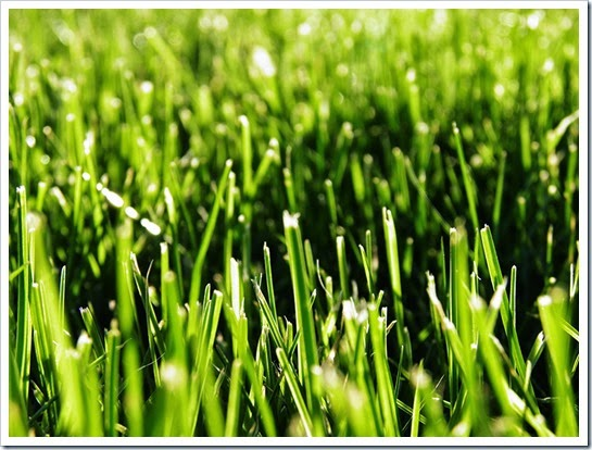 Grass---April-19-2015-Barb-Derksen