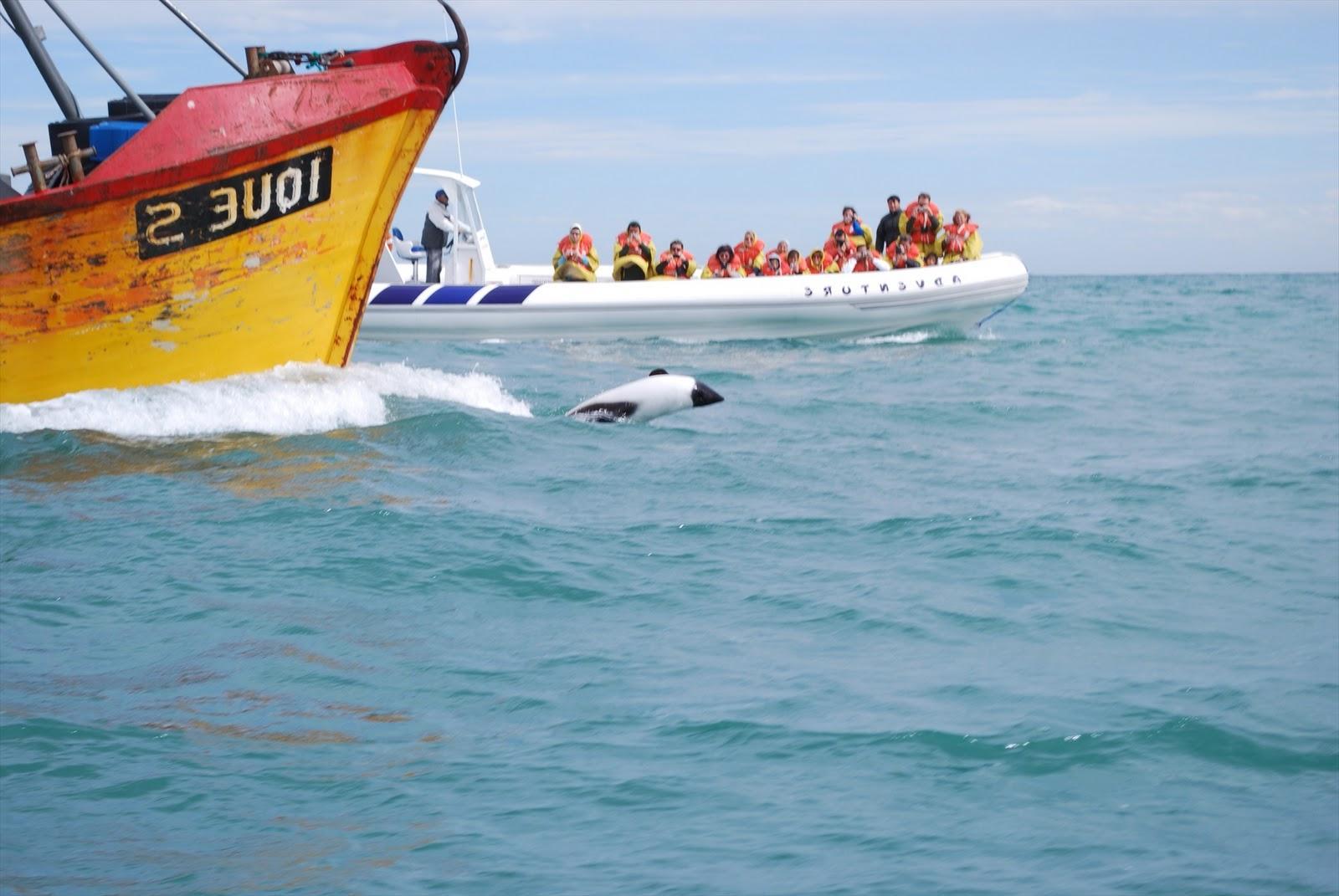 Puerto Rawson Dolphin Watching