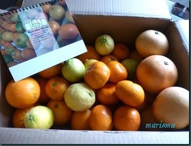 naranjas1 copia
