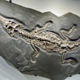 Houston Museum of Natural Science - 116_2713.JPG