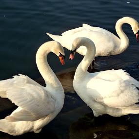 Love by Claudia Romeo - Animals Birds
