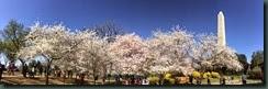 櫻花....