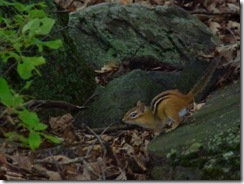 Chipmunk on WLT