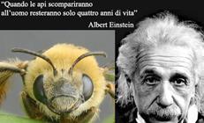 Einstein api