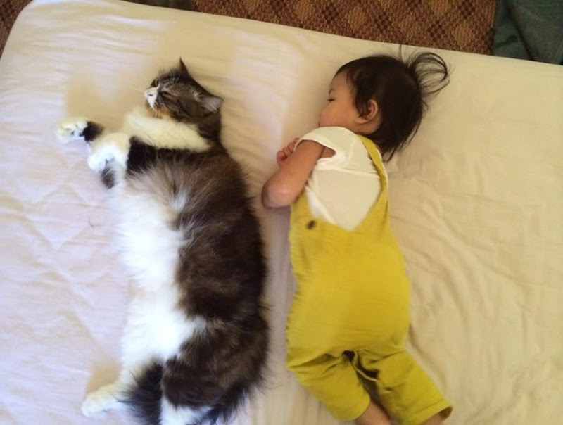 cat and baby