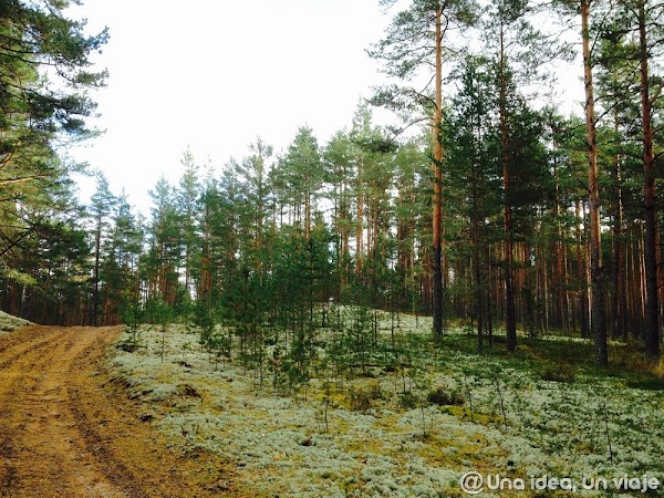 recorrido-paises-balticos-top-3-parques-naturales-unaideaunviaje.com-33.jpg
