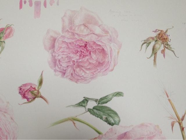 rose detail Olivia