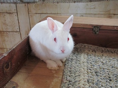 Bunny Rabbitt