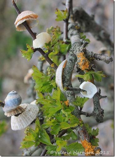 12-shell-tree