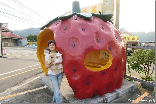 大湖草莓 (21)