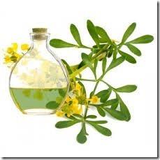 las-boticarias-aceite-esencial-puro-y-natural-de-ruda-x-15ml-12254-MLA20056923177_032014-O