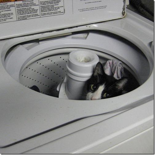 gatos sitios para esconderse (15)