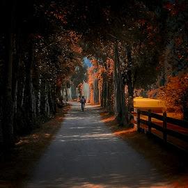 by Milan Jovanovic - City,  Street & Park  City Parks