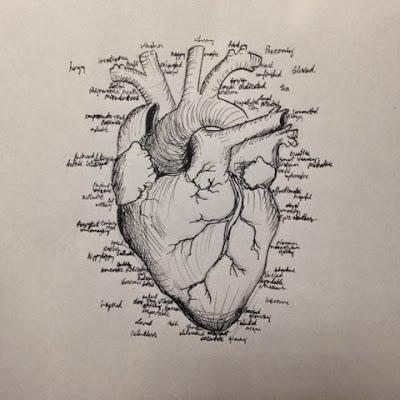 97 hearts anatomical heart