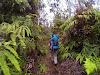 Through lush rainforest