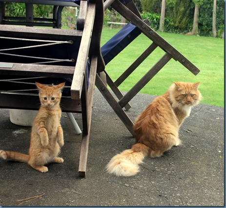 Boris and Ginger Boy