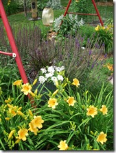 Daylilies, petunias, founbtain grass, purple salvia