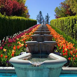 Tulip Festival-2 by Rick Roesner - Flowers Flower Gardens