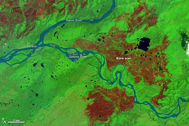 The Operational Land Imager on the Landsat 8 satellite acquired this false-color image of burn scars around Tanana, Alaska, on 24 July 2015. With this band combination, burned forest appears brown. Unburned forest is green. Tanana's airport is visible in the upper left of the image. Download the large image to see several other burn scars from the area. Photo: Jesse Allen / NASA Earth Observatory