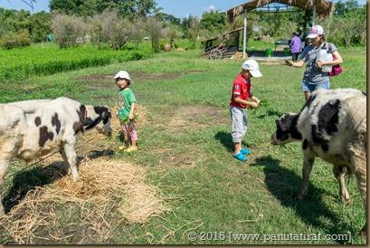 Pluke Rak Farm-03285