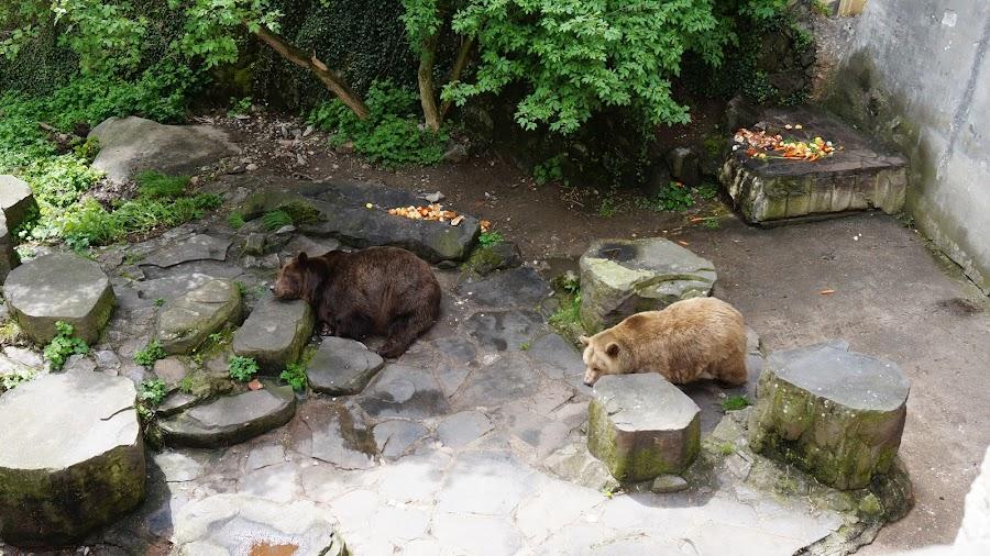 Медведи во рву замка