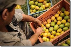 agricultura hortifruticola