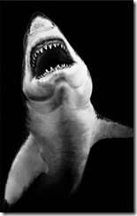 shark-robert-longo-8