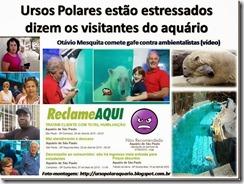 ursos_polares_estressados