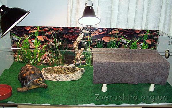 Условия для домашнего содержания сухопутных черепах