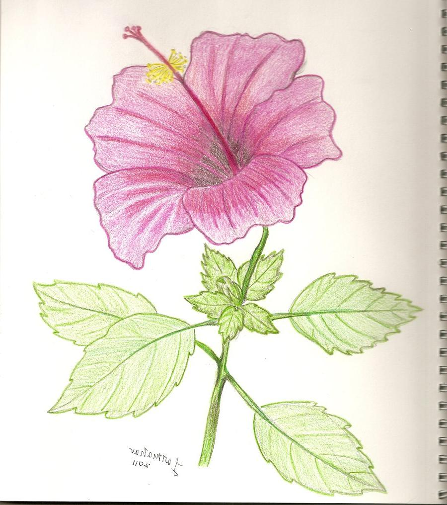 Indian Restaurant Flower Mound Hibiscus Flower Drawing