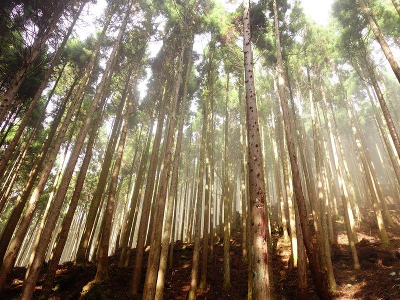 2013_1126-1129 鹿林山-1_230
