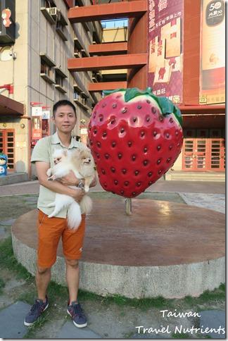 大湖草莓 (26)
