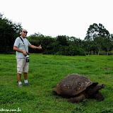 Tartaruga gigante - Puerto Ayora, Santa Cruz - Galápagos, Equador