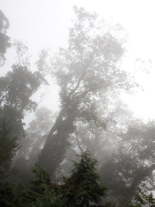 2013_1104-1106 雪山ㄎㄥ-2_010