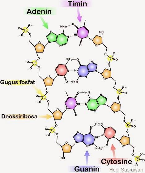 Komponen Penyusun Rangkaian DNA